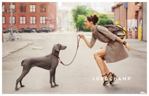 longchamp-dog-coco-roch